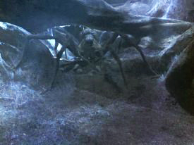 Mythical Creatures In Harry Potter
